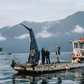 Una balena avvistata nel lago di Lugano
