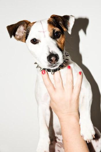 didofontana_dog
